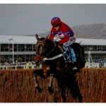 Sprinter Sacre items now back in stock