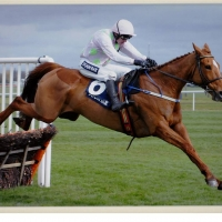 Annie Power 12 x 10 Mounted Photograph